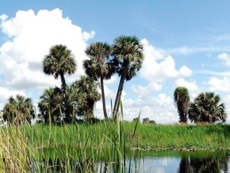 Palmtreedepot Retailer Of Sabal Palm Tree At Carolina